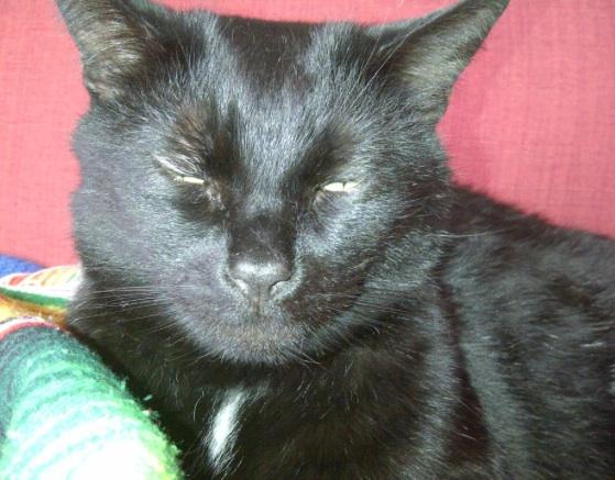 Blakey the cat